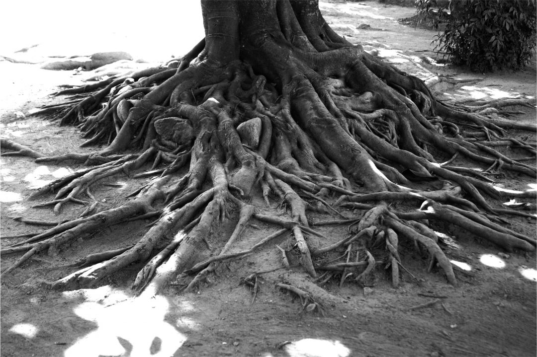 Rooted in Resilience